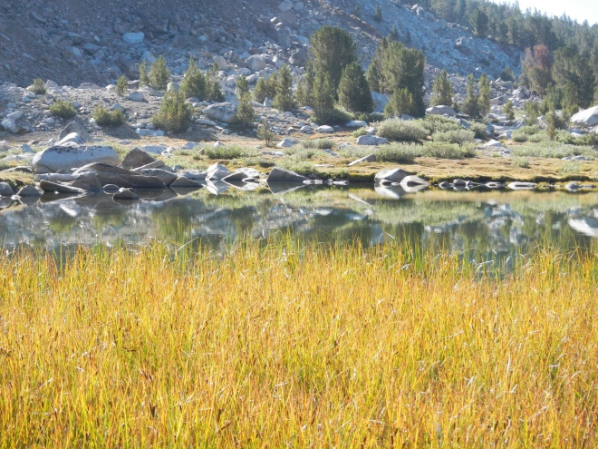 Grasses, water, rocks, trees. We climb toward Silver Pass.