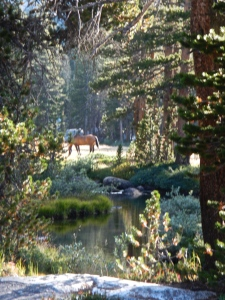 Horses grazing in the late afternoon sun in lovely Rosemarie Meadow.