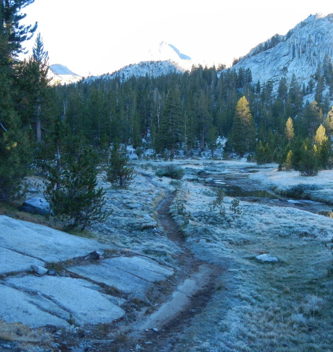 A cold, frosty morning at Rosemarie Meadow.