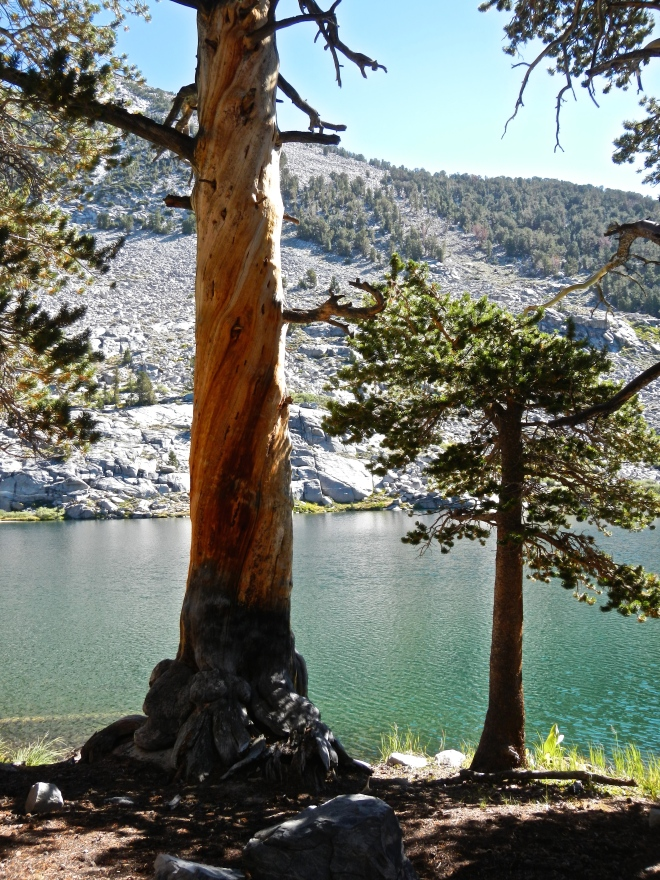 A picturesque dead tree at the edge of one of the Sally Keys Lakes. If I had more time, I'd probably photograph every tree between Yosemite and Whitney, dead or alive.