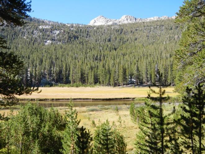 McClure Meadow