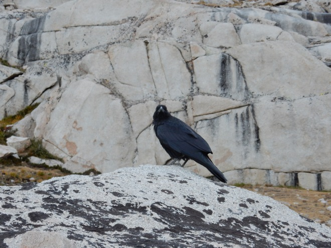 A raven talked to everyone passing by, sending us on our way up the switchbacks.