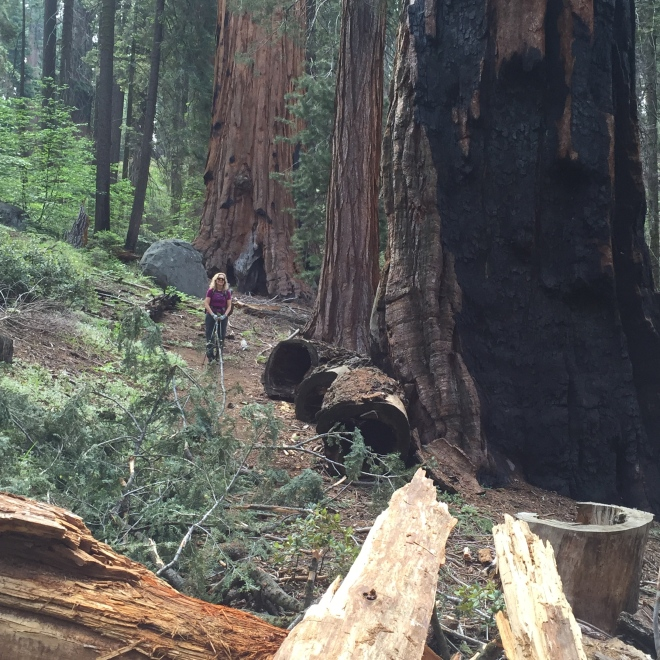 The Big Trees surrounded us.