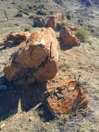 Right at the top of the hill, we found a beautiful big log of stone.