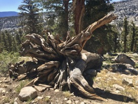 I love the fallen tree roots!